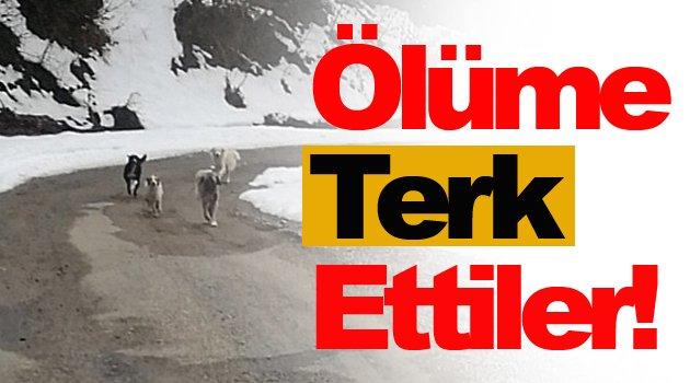 AK Partili Belediye için utanç verici iddia!