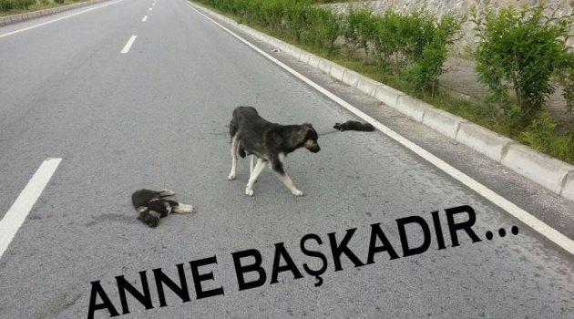 Anne Köpek Ölen Yavrularının Başından Saatlerce Ayrılmadı