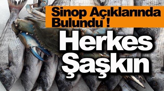Mavi yengeç Karadeniz'de ağlara takıldı
