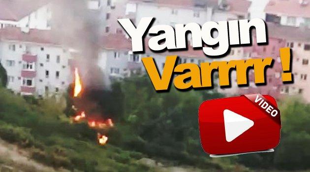 Sinop'ta ağaçlık alanda yangın çıktı.