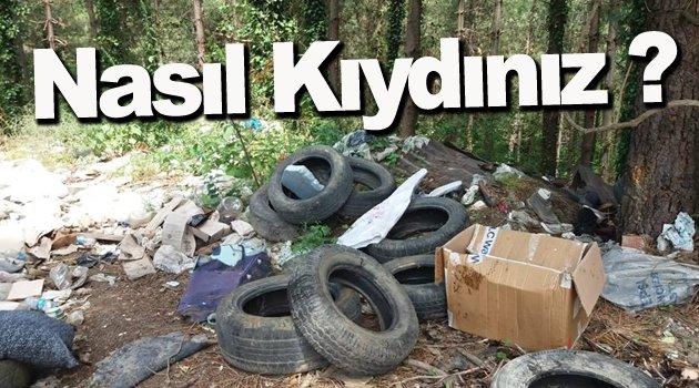 Sinop'ta Ormanı Çöplük Yaptılar !