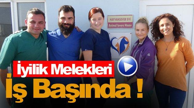 Sokak Hayvanları İçin Avrupa'dan Sinop'a Geldiler !