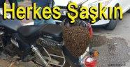 Motosiklet Kaskına Konan Arılar Şaşırttı