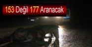 Yaban Hayvanlar İçin Aranacak Numara Alo 177