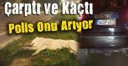 Polis Köpeğe Çarpıp Kaçan Aracı Her Yerde Arıyor