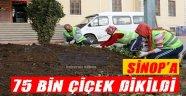 Sinop'a 75 Bin Çiçek