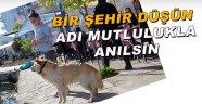 Mutluluğuna mutluluk katan şehir: Sinop