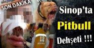 Sinop'ta Pitbull Dehşeti