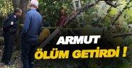Armut ağacından düşen vatandaş hayatını kaybetti