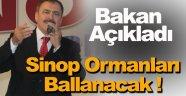 Bakan Eroğlu; Sinop'ta Bal Ormanları Kurulacak !