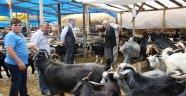 Boyabat'ta kurban pazarı açıldı