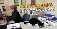 Fakültedeki odasında 3 kediyi misafir ediyor