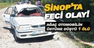 Seyir halindeki aracın üzerine ağaç devrildi: 1 ölü, 2 yaralı