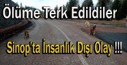 Sinop'ta İnsanlık Dışı Olay !!!