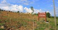 """Sinop'ta """"Yeni Doğan Hatıra Ormanı"""" oluşturuldu"""