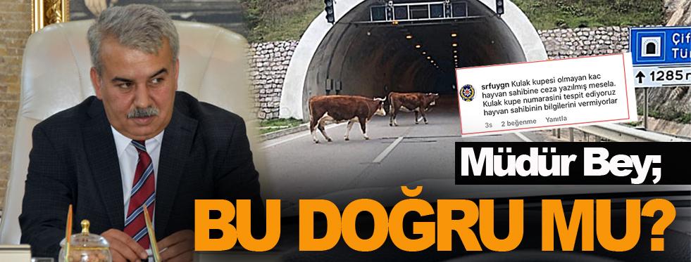 Bu ineklerle başımız dertte !