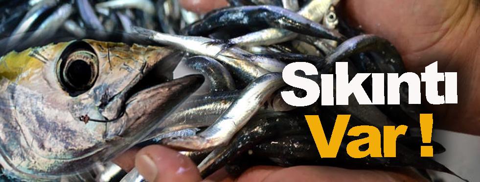 Palamut bereketi balıkçılarda hamsi tedirginliğine yol açtı