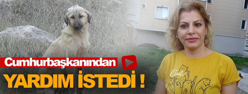 Yaylaya ölüme terk edilen köpekler için vakit daralıyor !
