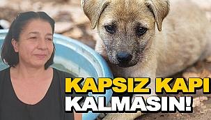 HAYDİ SİNOP, KAPSIZ KAPI KALMASIN!