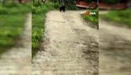 Köye kadar inen ayı kamerayla görüntülendi