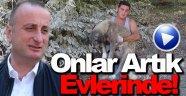 Yaylada ölüme terk edilen köpeklere Sinop Belediyesi sahip çıktı