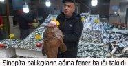 Sinop'ta balıkçıların ağına fener balığı takıldı